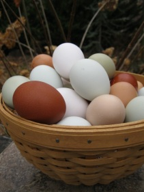 Assorted Eggs 12-12