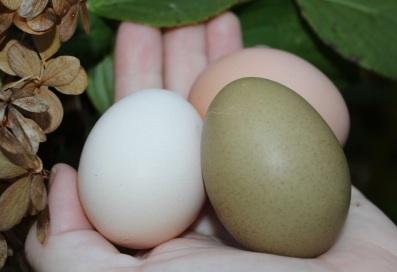 olive egg